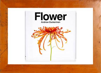 3.22(土) ルーカス校長と英語で花の絵本をつくろう|マンモススクール開校 @ 西宮阪急