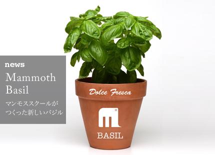 news-basil